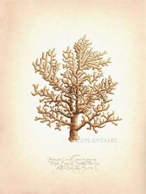 Branch Coral