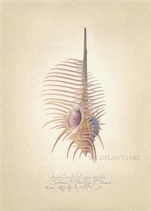 Venus Comb
