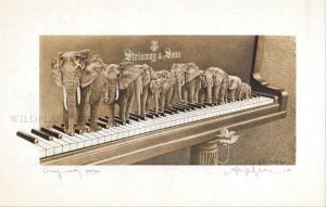 Ivory Walk