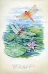 Pond Dragonfies