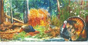 Seasons of the Turkey