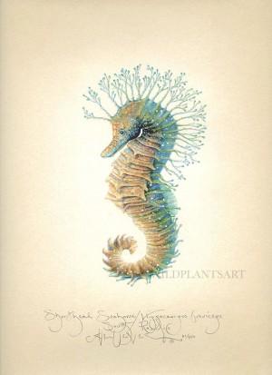 Shorthead Seahorse (deux)