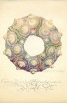 Imperial Sea Urchin