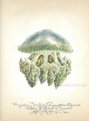 Rizostone Jellyfish